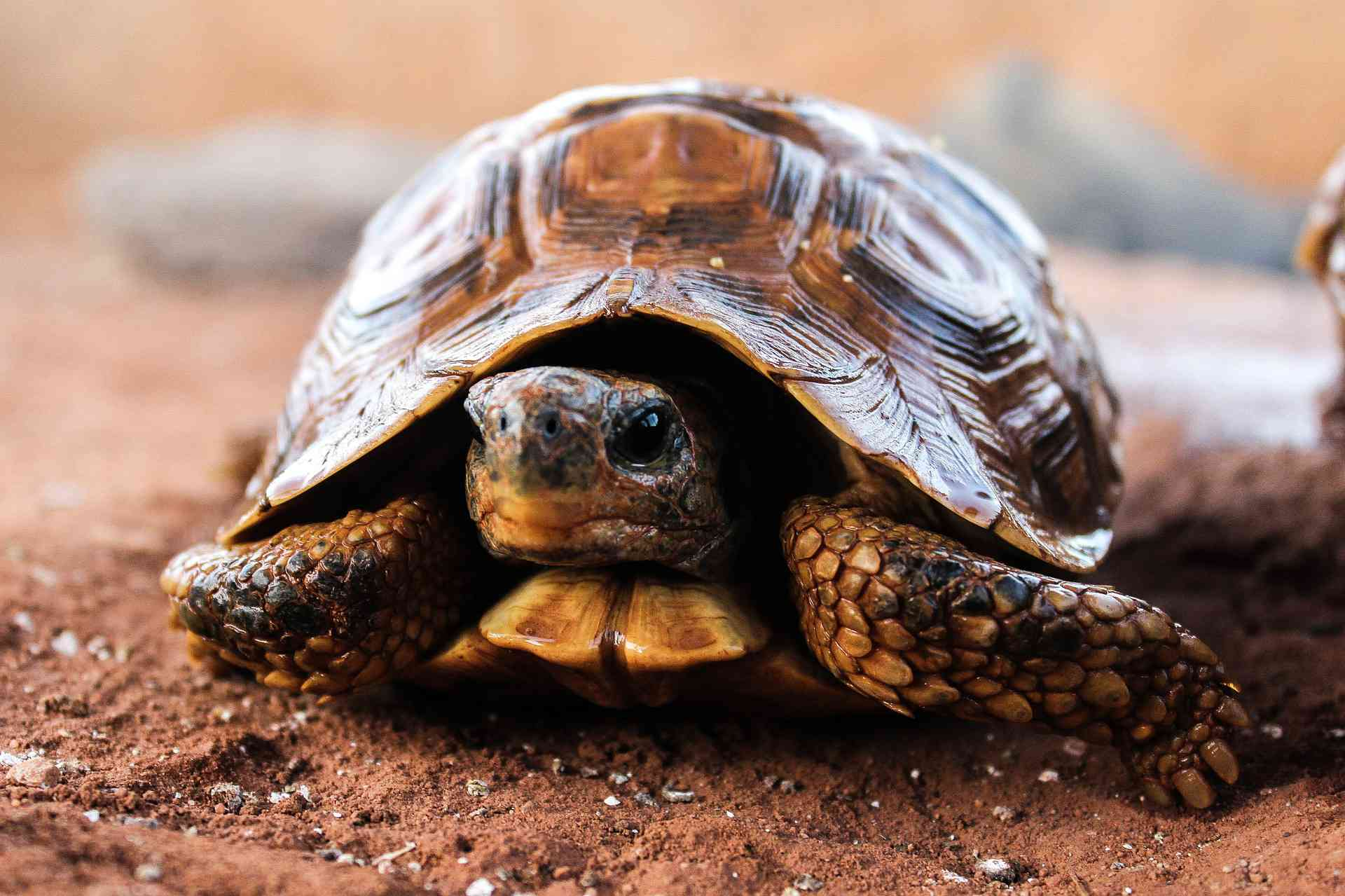 10 Facts About Turtles and Tortoises