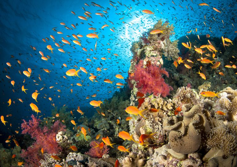 Image result for ocean habitats