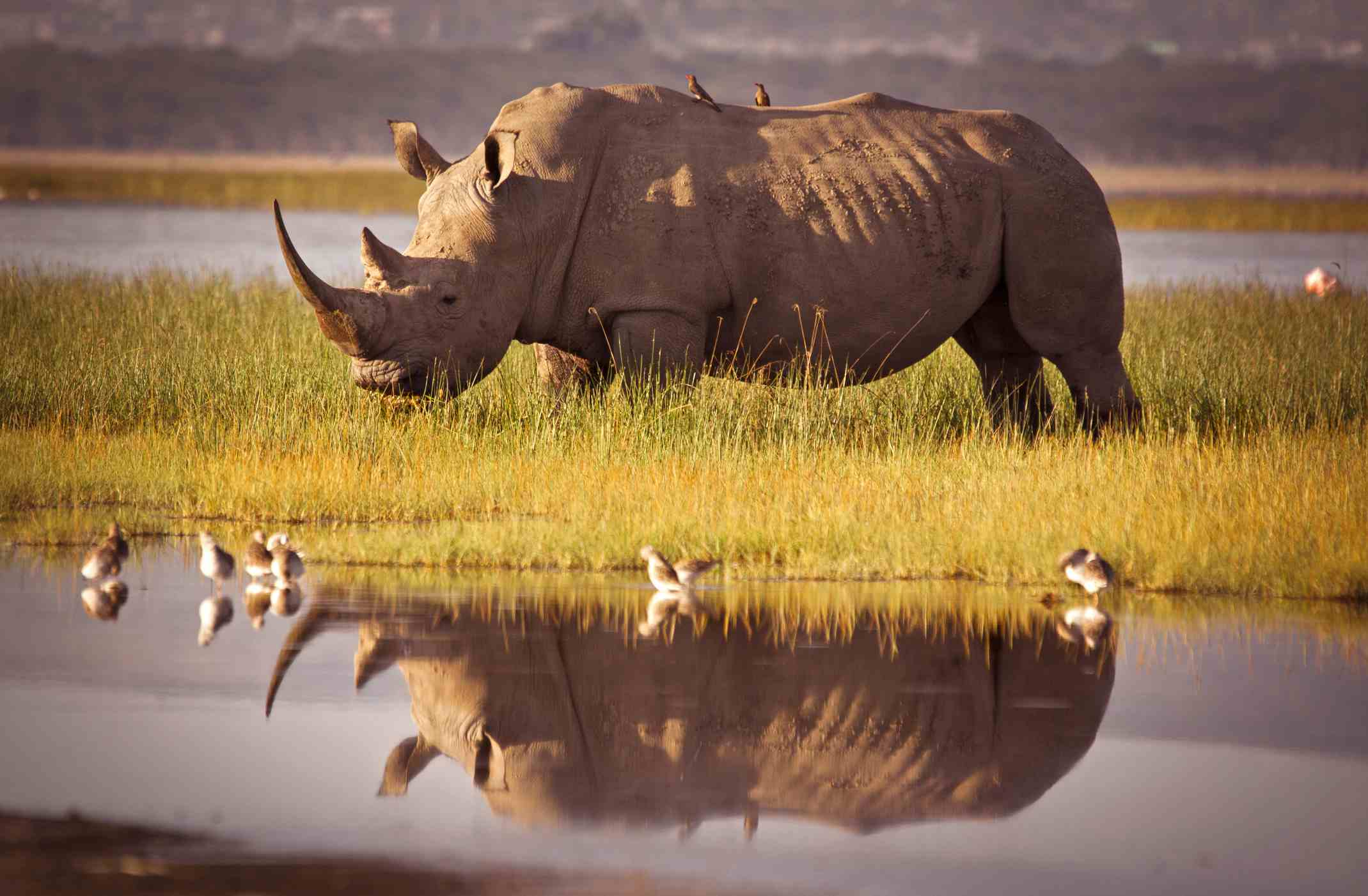 Rhino standing in front of a water hole