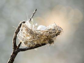 Bird Nest in a tree