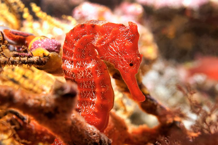 Top Ten Facts about Seahorses