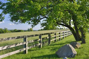 Tree, fence and rocks.