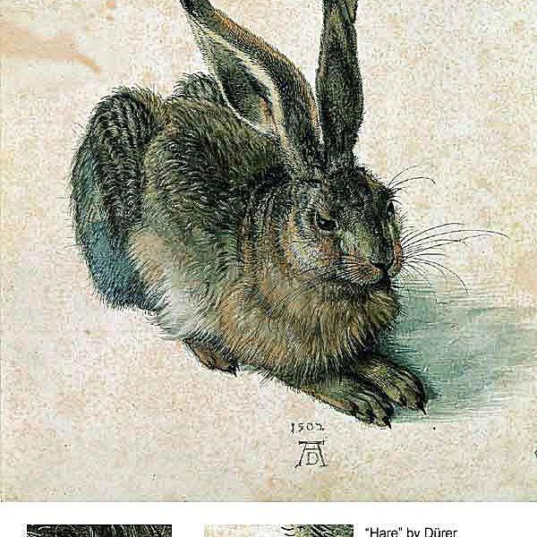 Rabbit or Hare - Albrecht Dürer