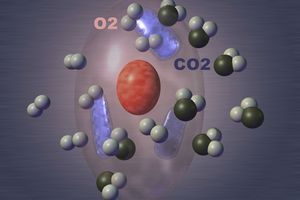 Take this quiz to test your understanding of the process of cellular respiration.