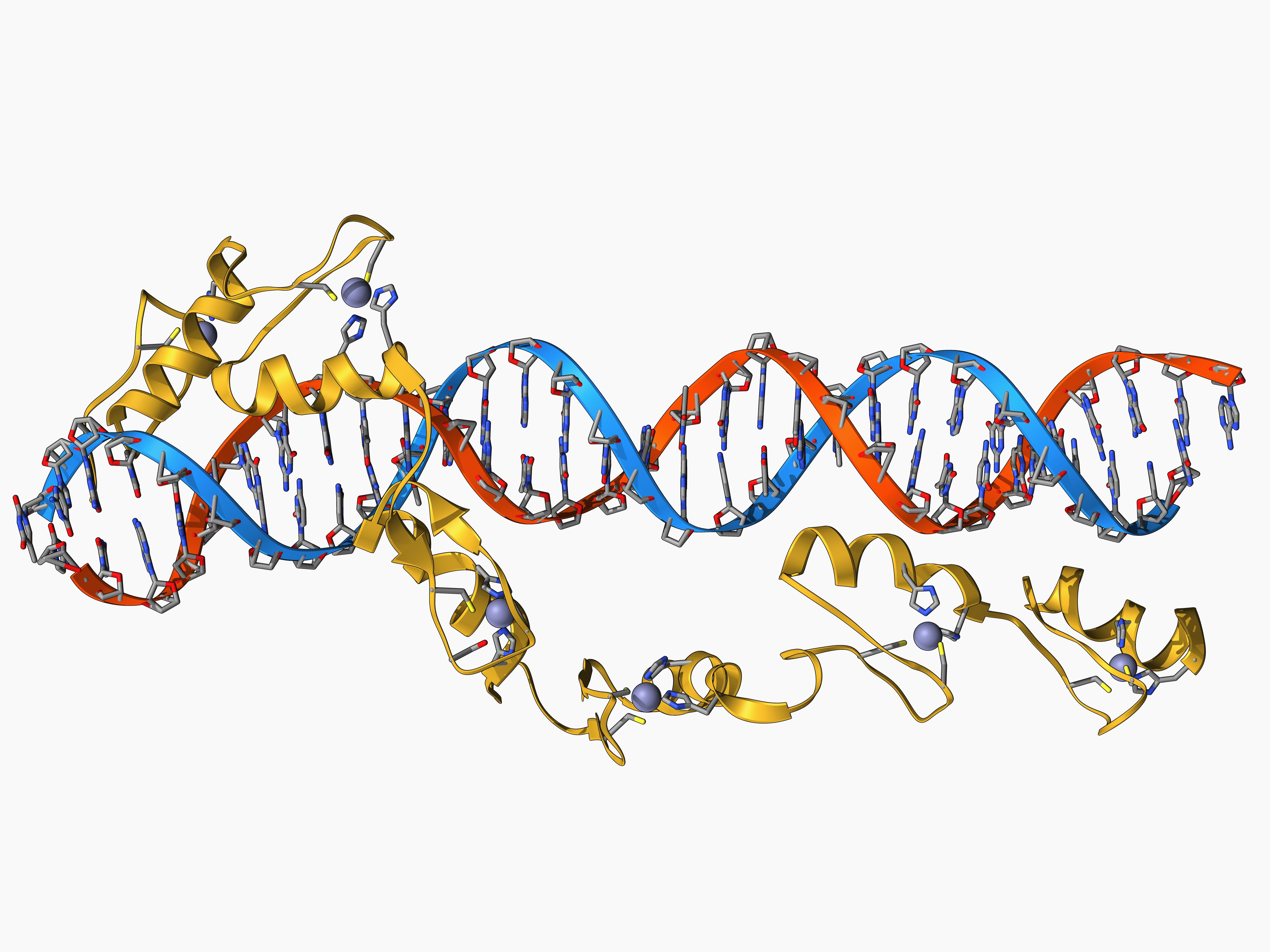 how to go from dna to rna