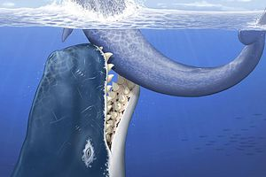A Leviathan attacks its prey with a mouthful of teeth, some up to 14 inches long
