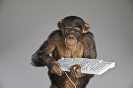 Chimpanzee holding keyboard