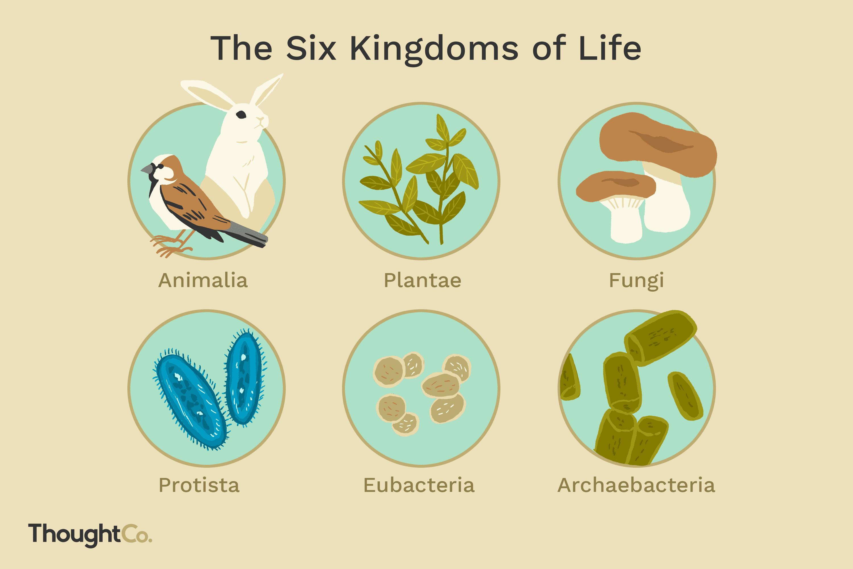 The Six Biological Kingdoms