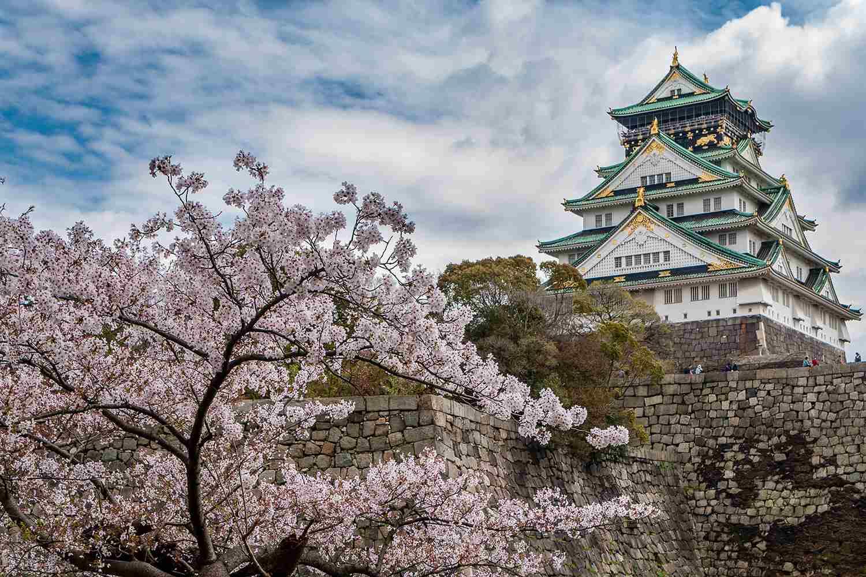 Osaka Castle during sakura (cherry blossom) season