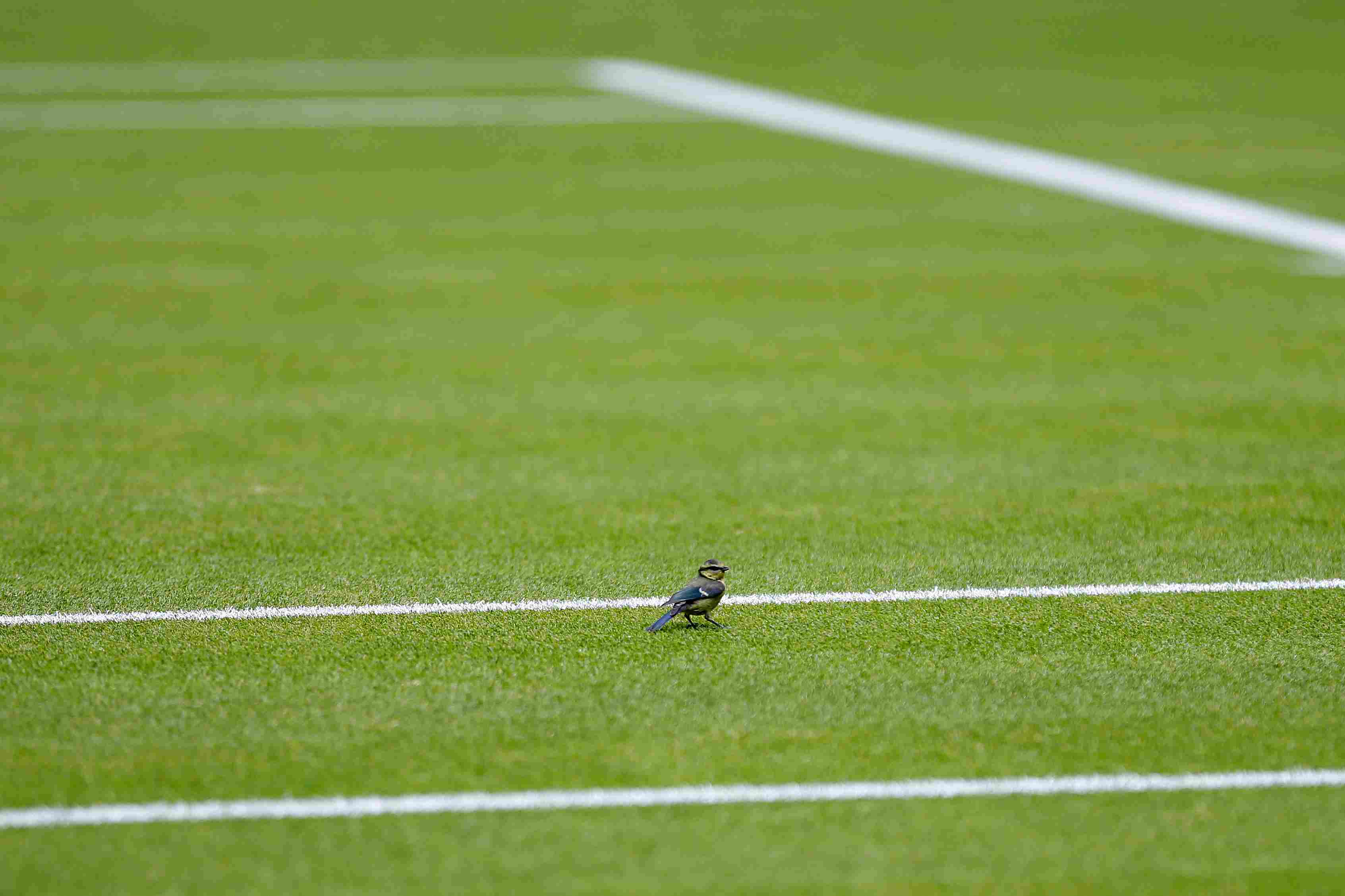The Pros And Cons Of Grass Tennis Courts