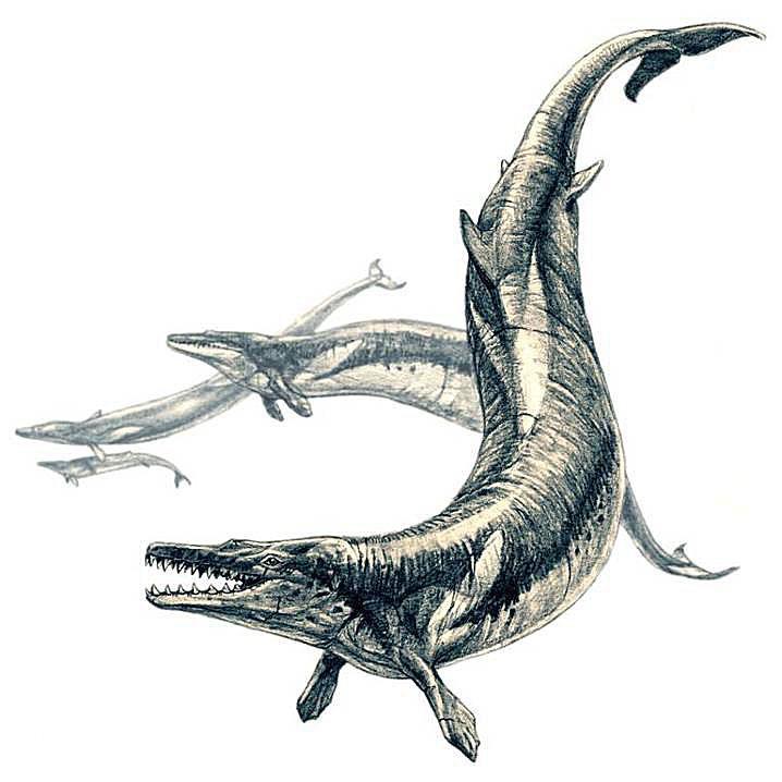 An illustration of the <i>Basilosaurus</i>