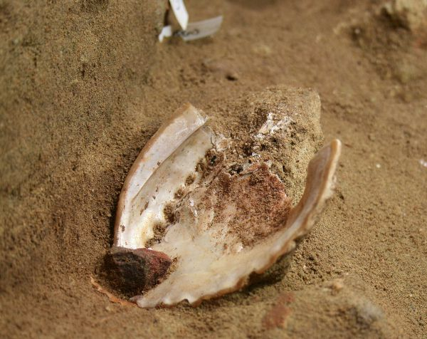 Abalone Shell from Toolkit 2 at Blombos Cave