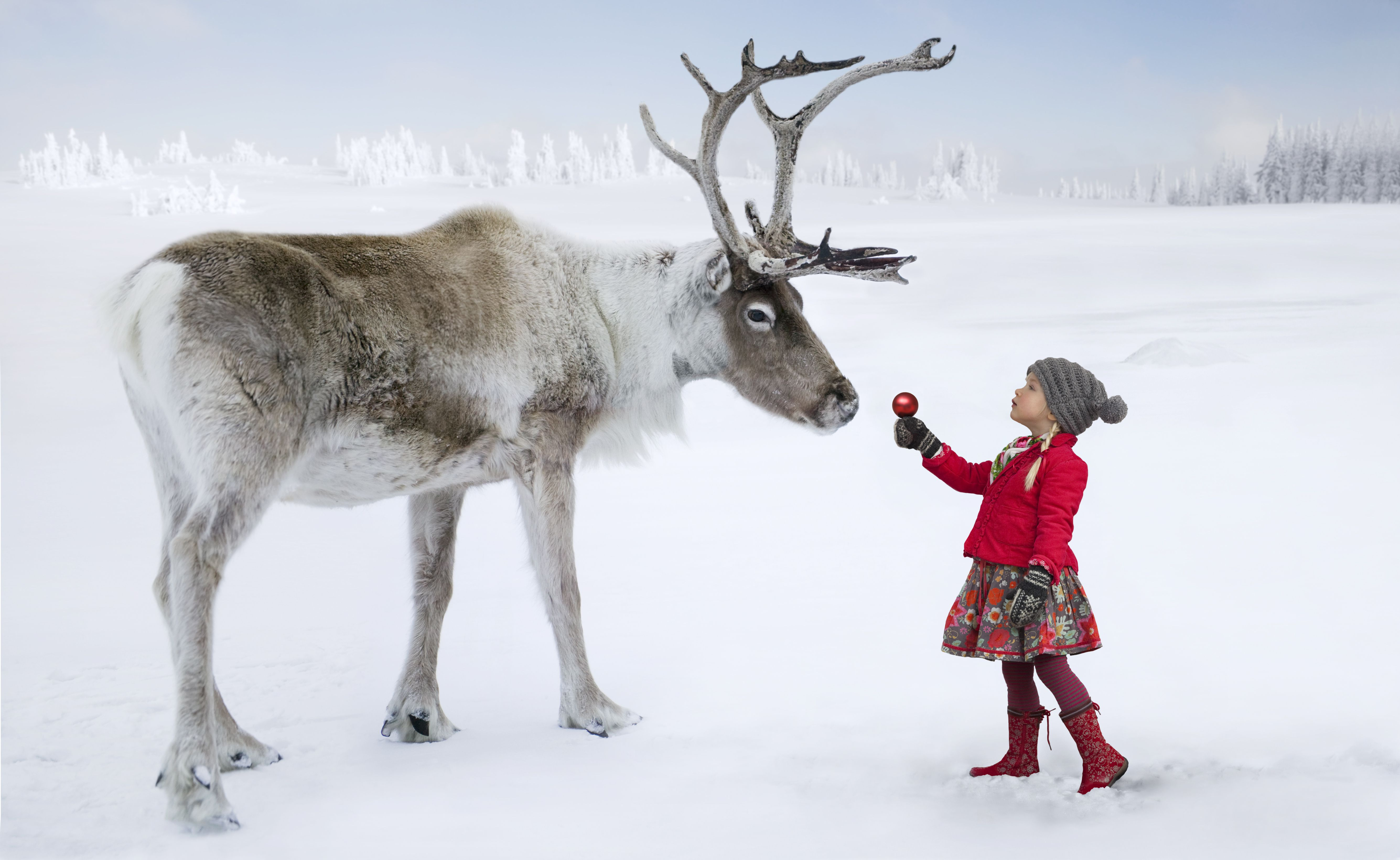 Are All Of Santa's Reindeer Female?