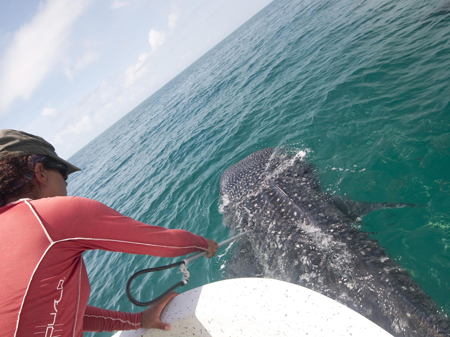 A Realistic Assessment Of A Marine Biologist S Earning Potential