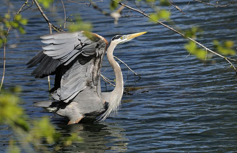 The Garza surname most commonly originated with the Spanish word for heron.