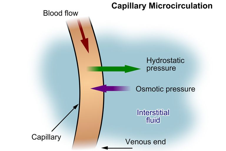 An Illustrated Guide to Capillary Fluid Exchange