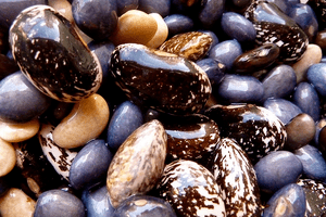 Pile of Common Beans