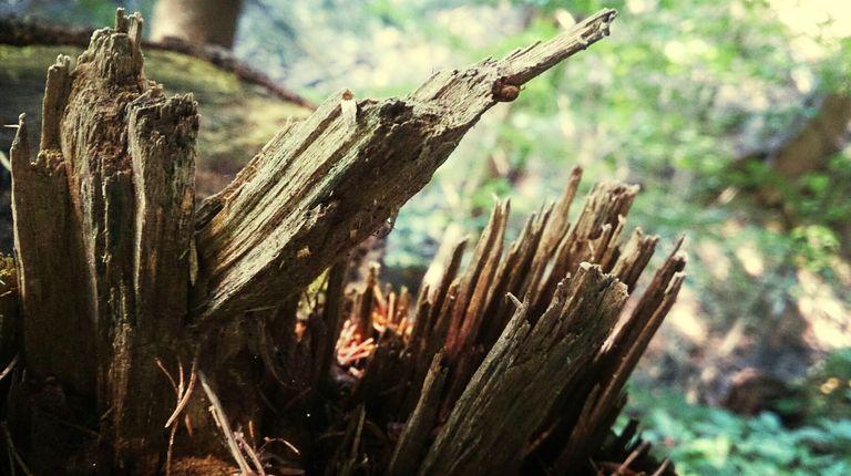 Broken tree trunk close-up
