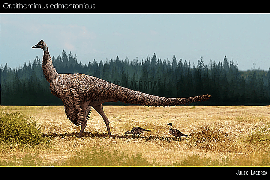 An <I>Ornithomimus</I> (bird mimic) with feathers, wings, and long tail forages in a field with its tiny offspring