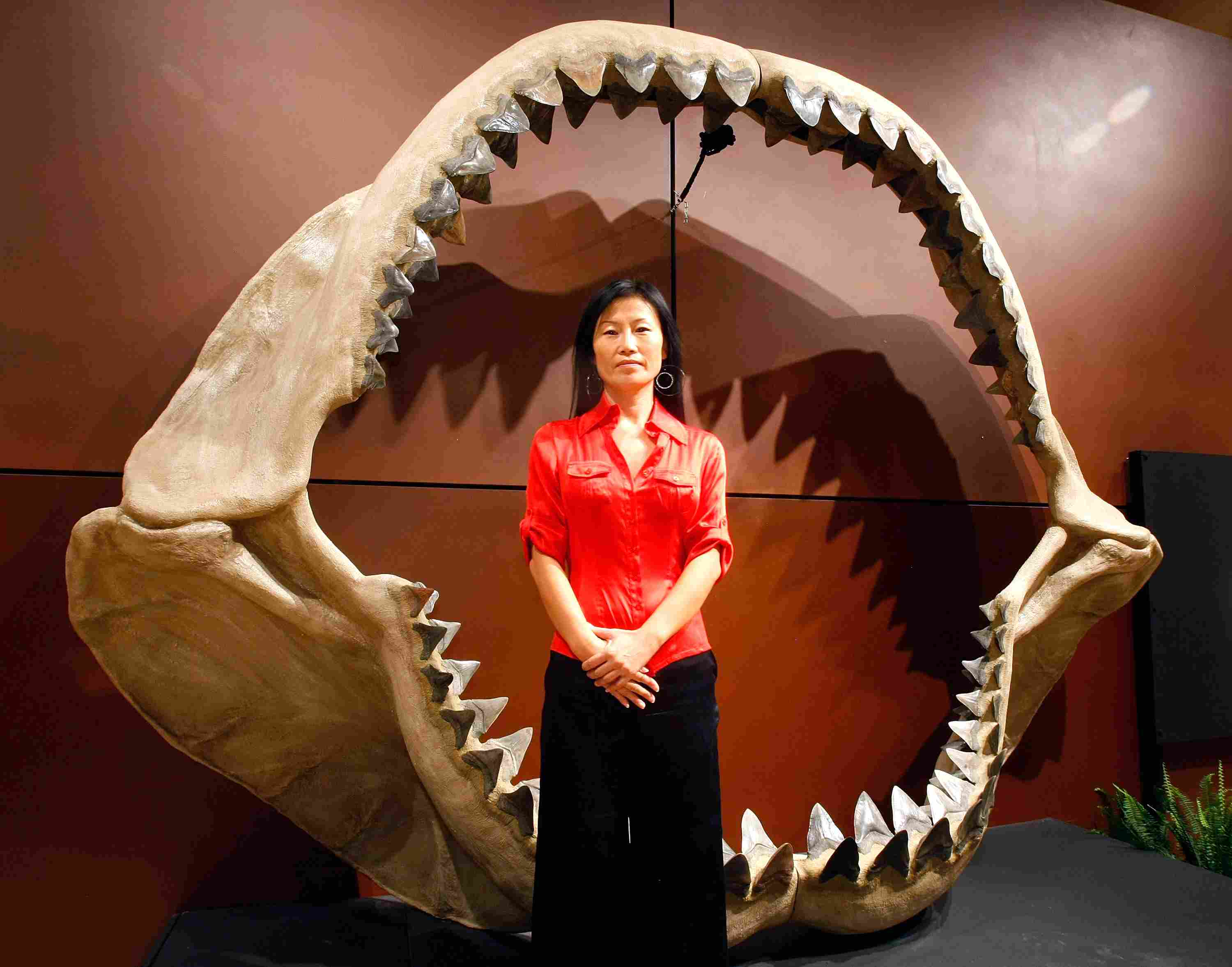 A woman stands next to the jaws of a Megalodon