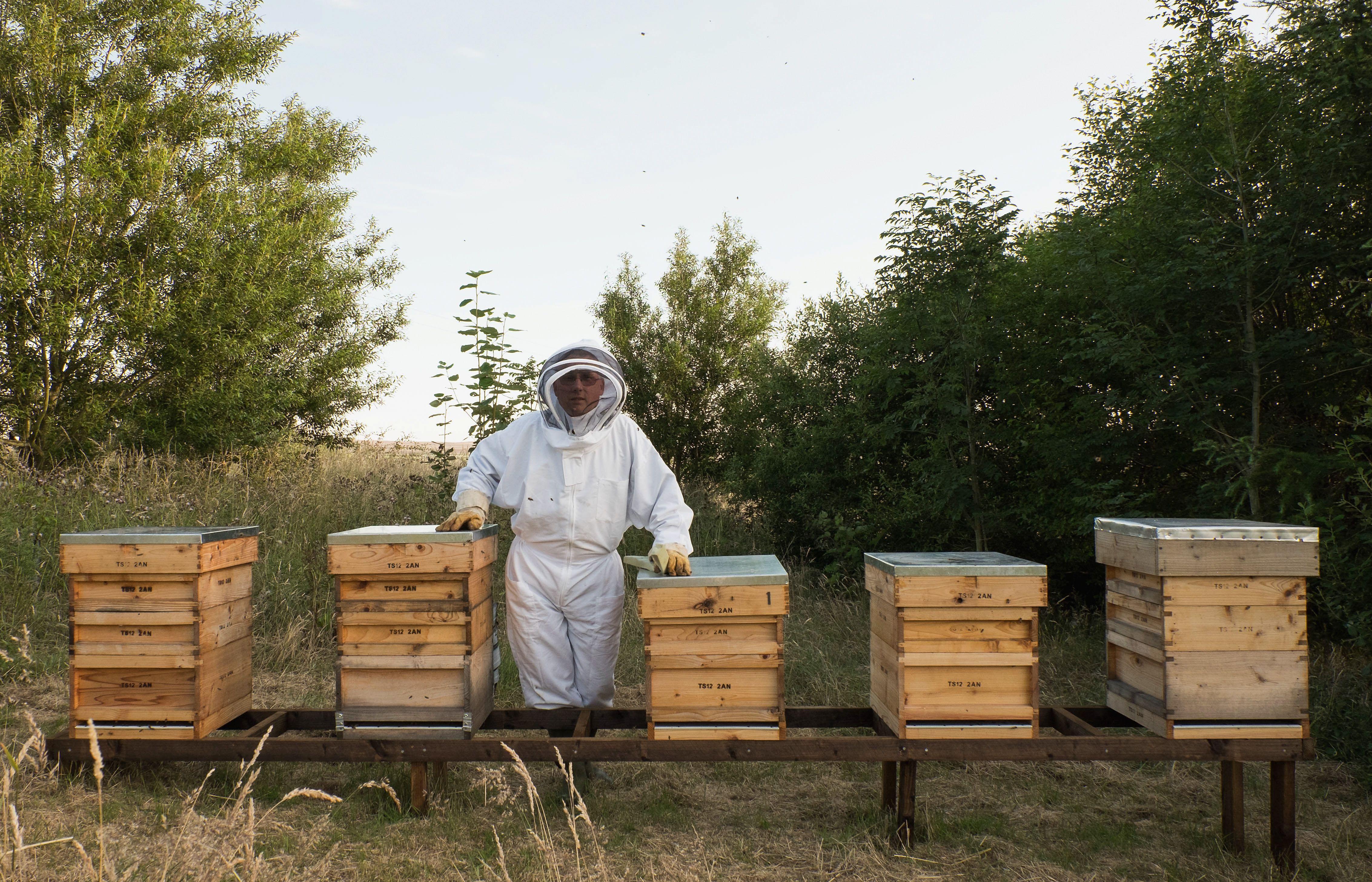 Παραγωγή μελισσοκομίας και μελιού