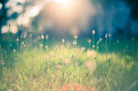 A field of plants and grasses in the sunlight.