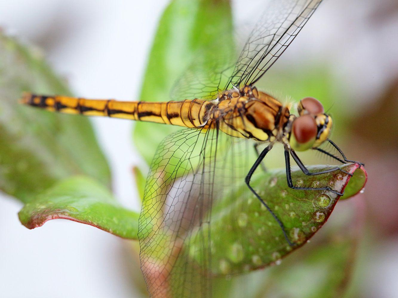 11000 Dragonflies