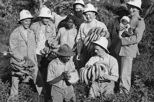 Colonial Soldiers on Banana Plantation