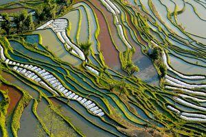 Yunnan Rice Paddies