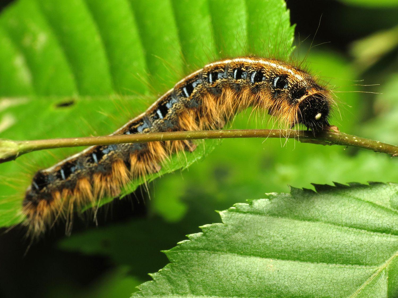 картинки гусеницы и грибами коричневый цвет