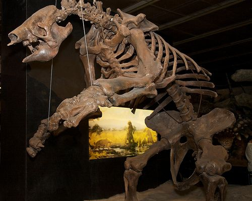 Giant Ground Sloth at the Houston Museum of Natural Science