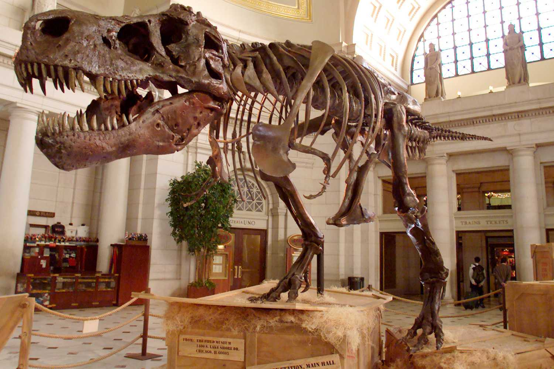 A Tyrannosaurus rex skeleton in a museum lobby