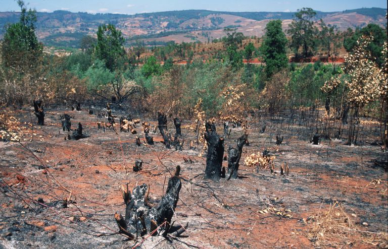 The Slash and Burn technique in Madagascar.