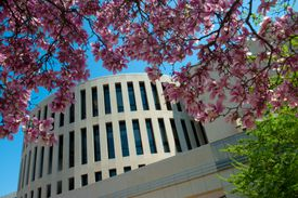 Rankin Hall with cherry blossoms