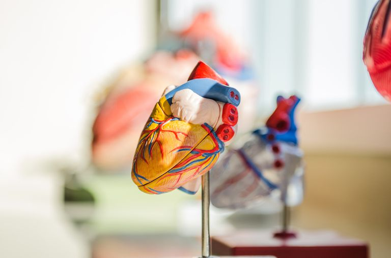 The Anatomy Of The Heart  Its Structures  And Functions