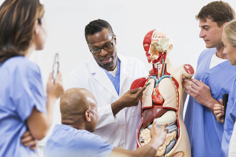 Medical School Anatomy Class