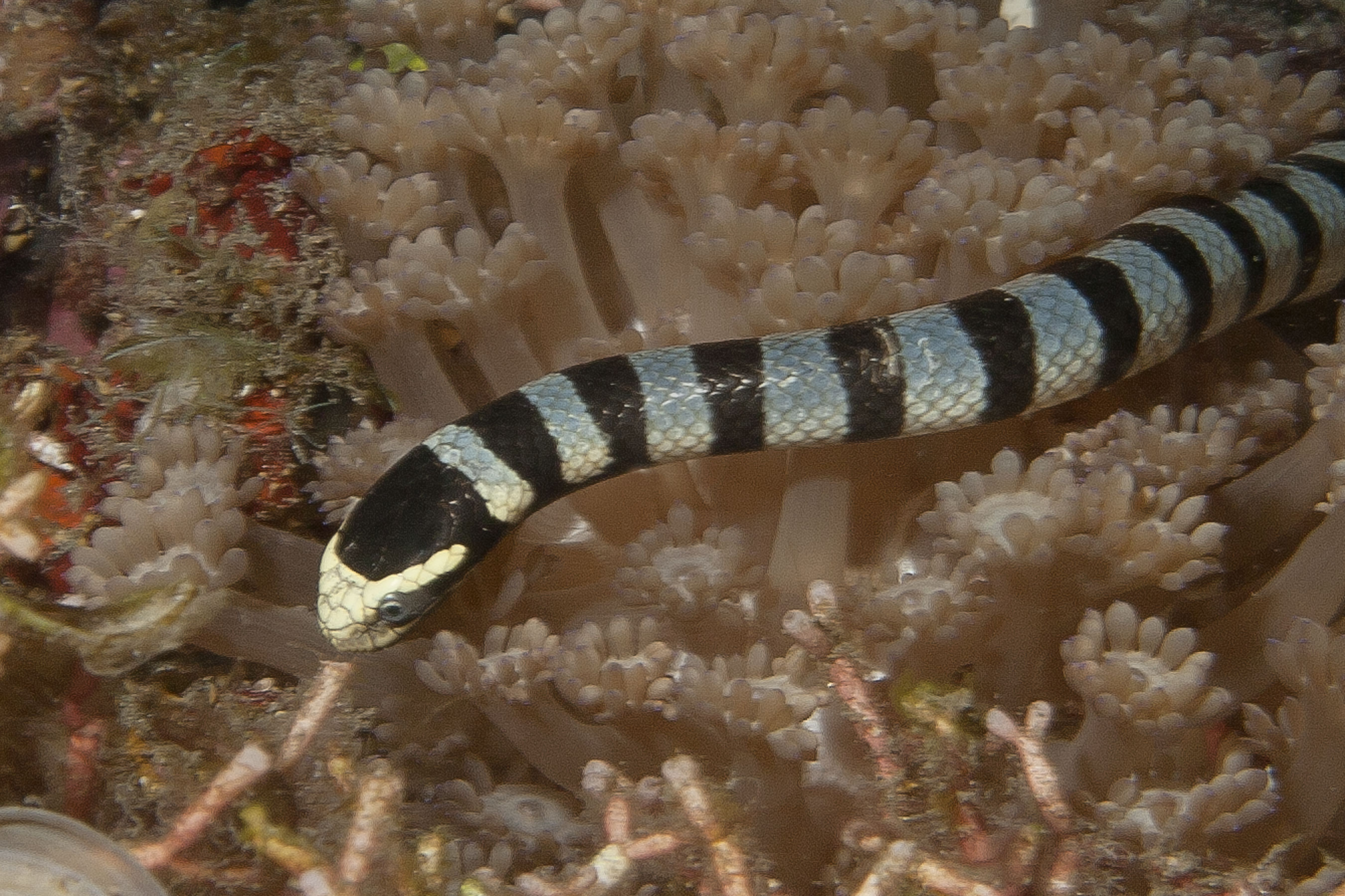Habitat destruction and over-fishing are threats to sea snake survival.