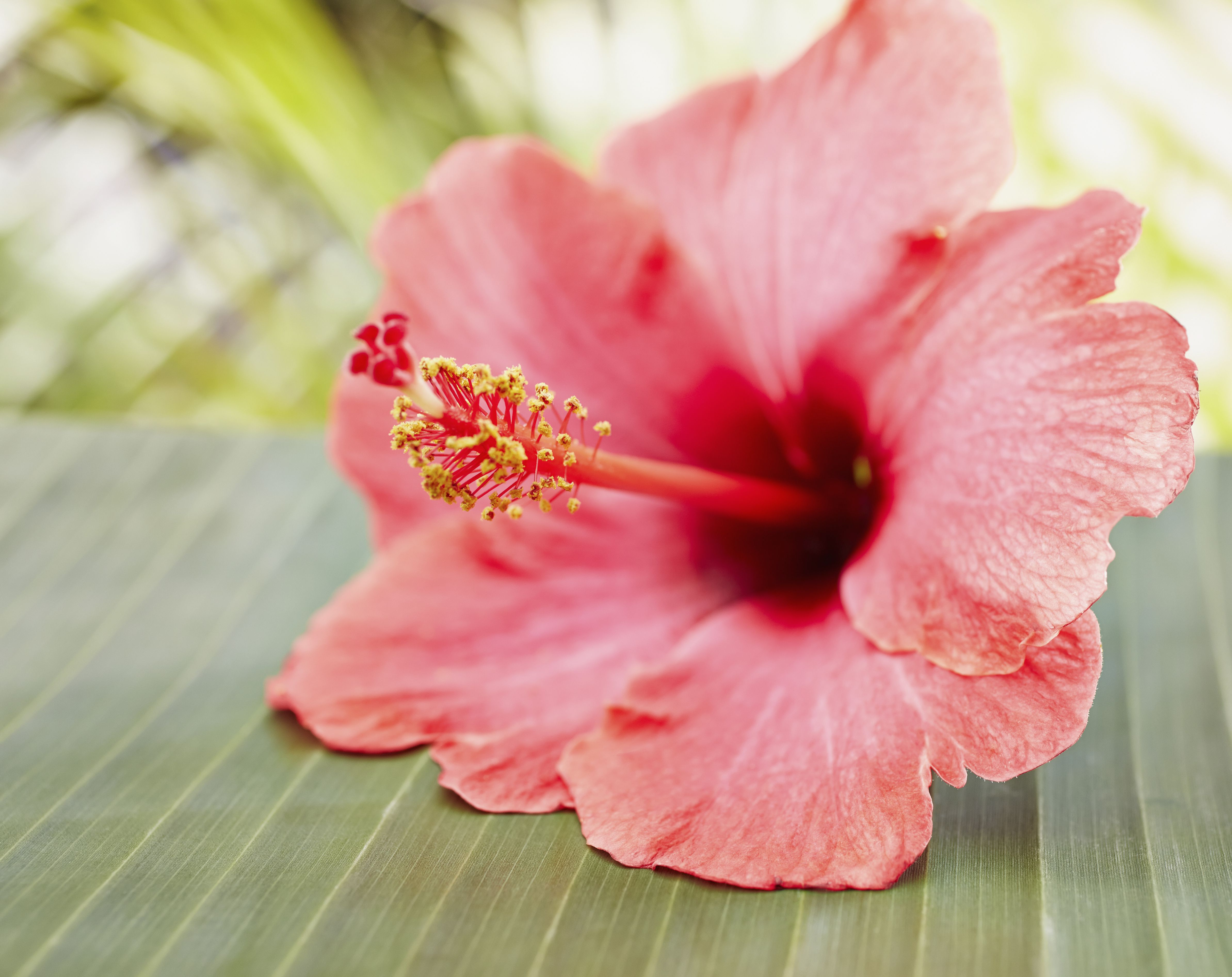 Names Of Common Flowers In Mandarin Chinese