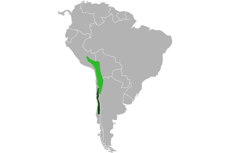 Map of chinchilla range