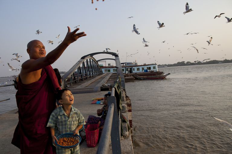 Burmese monk feeding seagulls