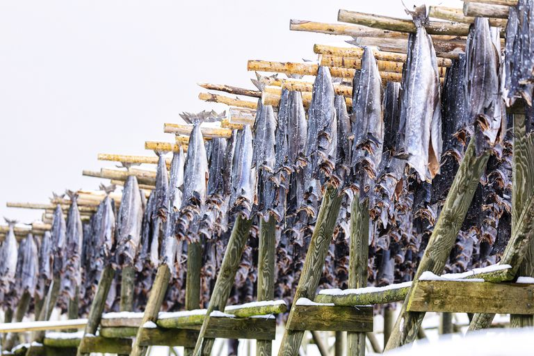 Stockfish on Wood Racks