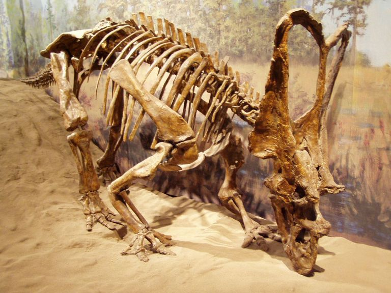 C. russelli/Royal Tyrrell Museum