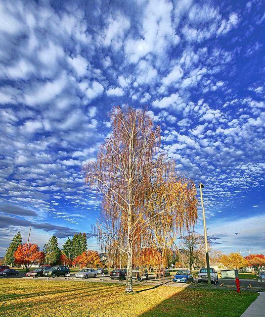 Big sky in Bozeman, Montana