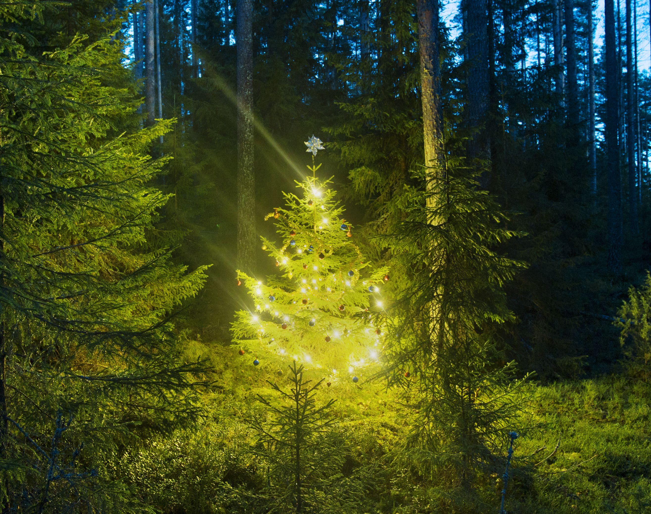 ChristmasTreeatNight.jpg