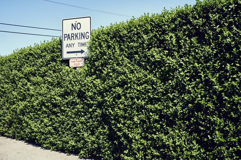 No Parking Any Time Sign in a Hedge