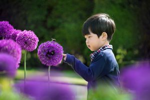 Asian toddler looking at a bee on a purple allium flower