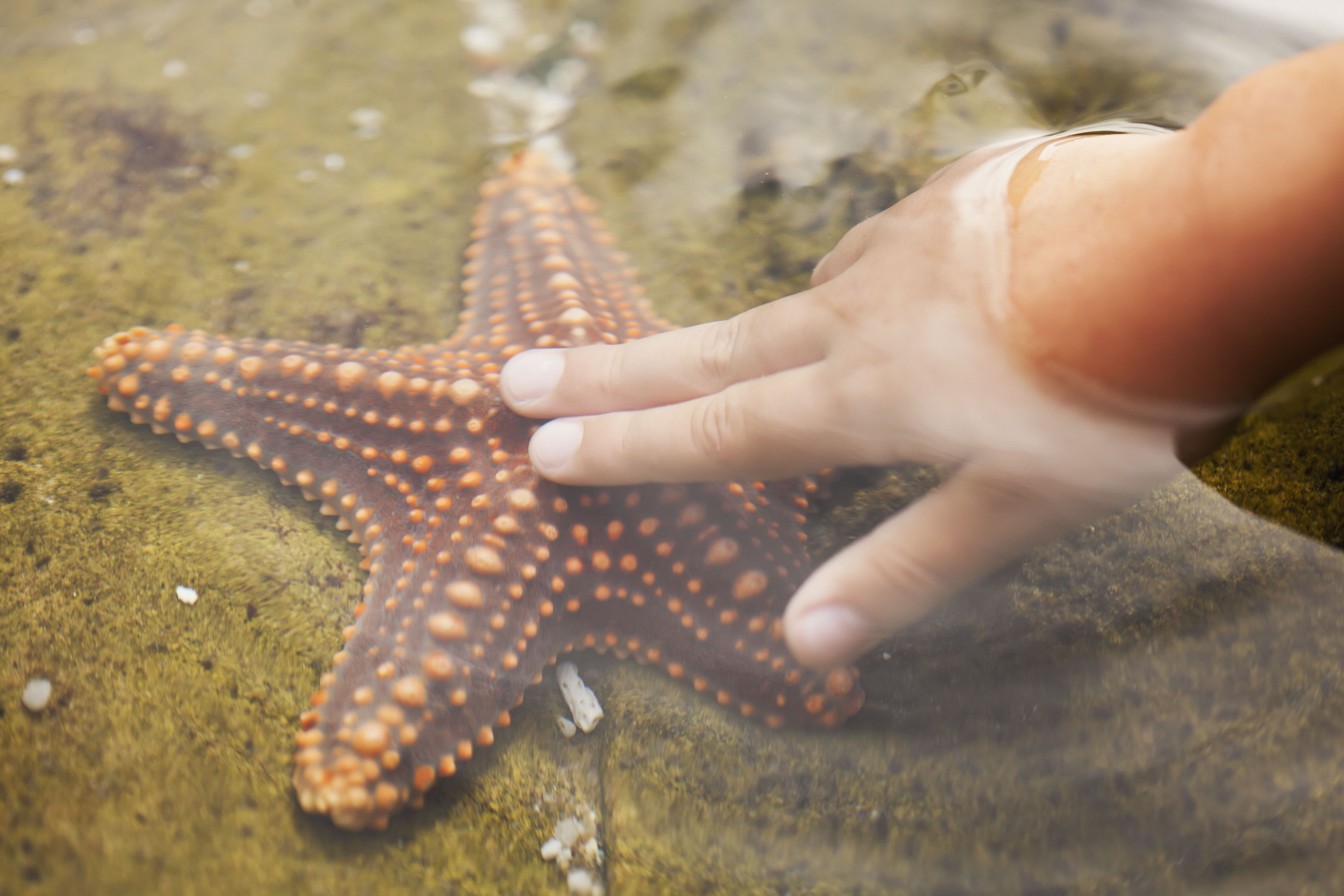 A Child's Hand Touching A Starfish