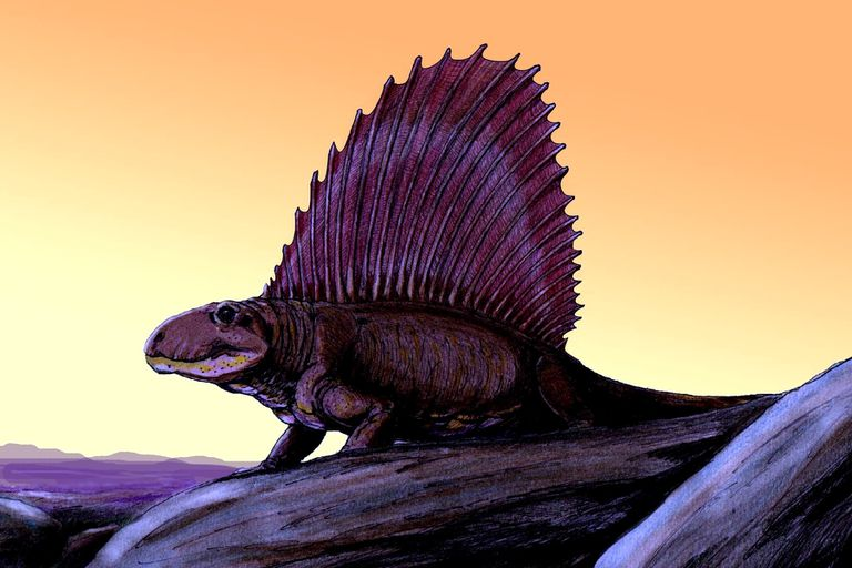 Dimetrodon drawn against the sunset