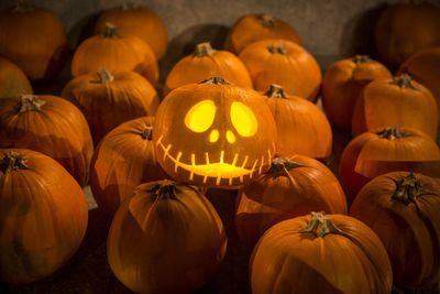 carving halloween pumpkins is one of many halloween traditions millions of americans will engage in this