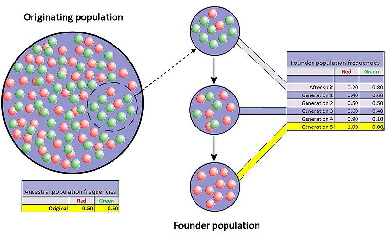 Founder Effect is a type of Genetic Drift